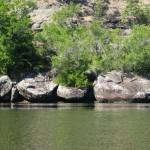 Arthur Boyd's Shoalhaven rocks