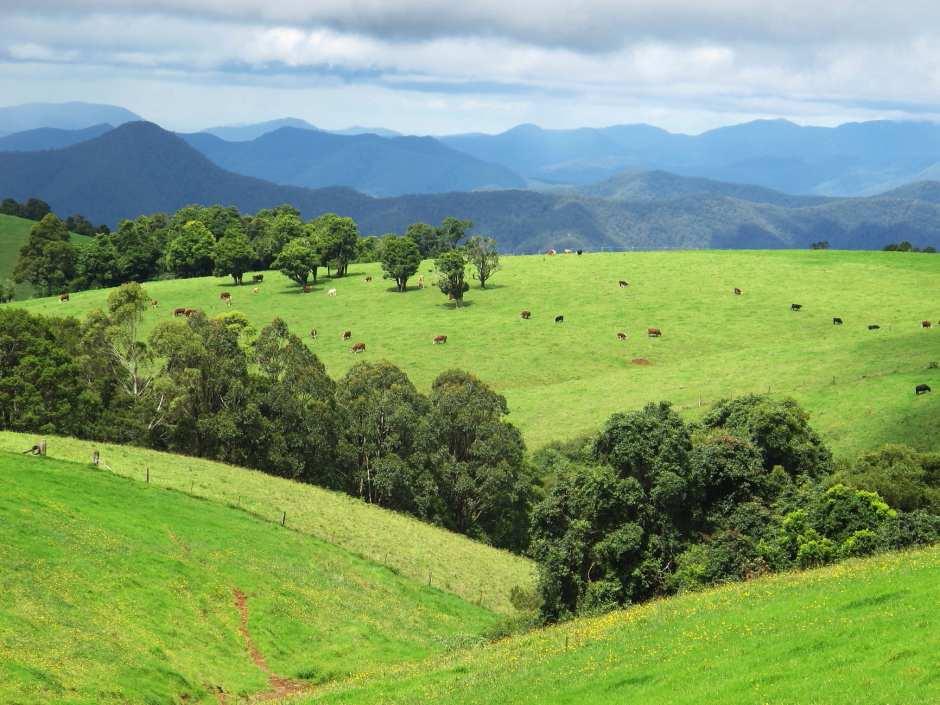 Dorrigo Plateau