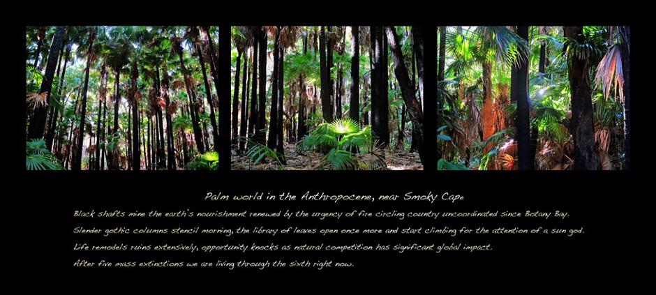 JB_Palm-Wolrd-triptych_sm-(2)