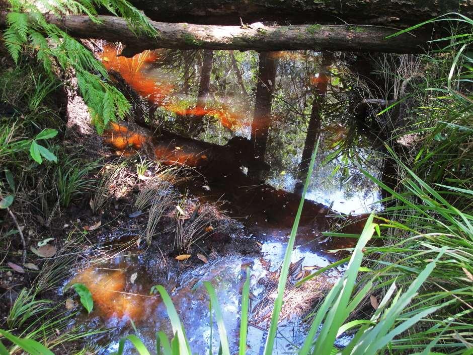 Jagun Oyster Creek