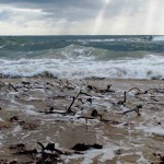 Kelp awash, Letterbox Beach