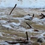 Kelp drowning