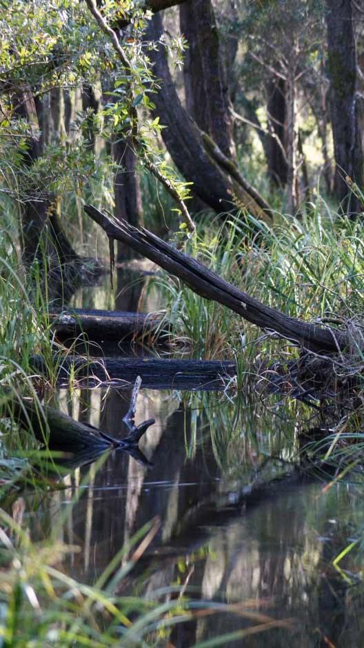Oyster Creek, Jagun