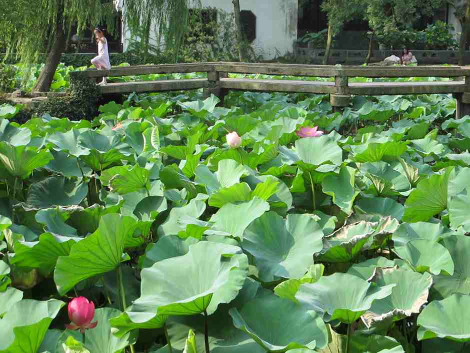 Garden of Humble Administrator, Lotus and young girl