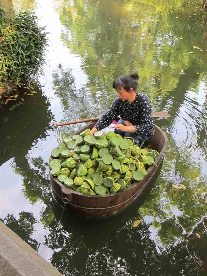 Garden of Humble Administrator, Lotus seed seller