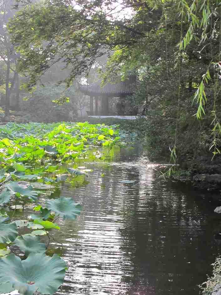 Garden of Humble Administrator, Lotus