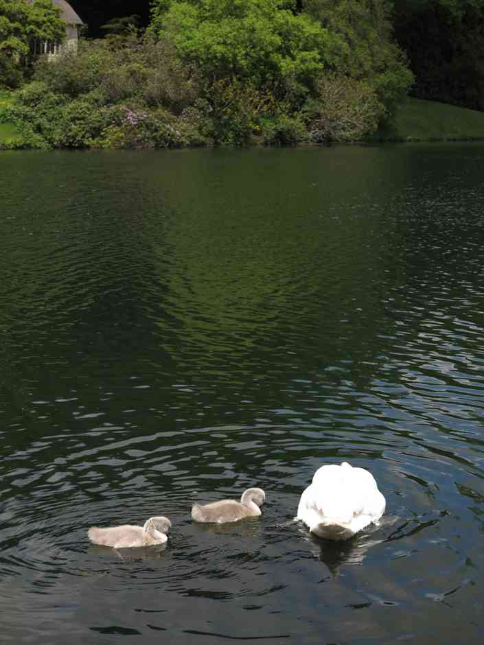 Stourhead, Gothic cottage with swans