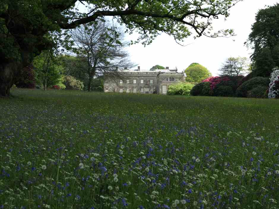Stourhead house and Bluebells