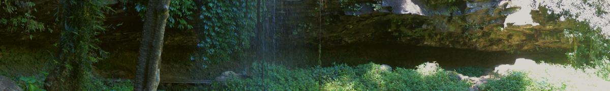 Dorrigo world heritage Crystal falls