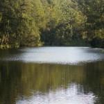 Bellinger River, Thora