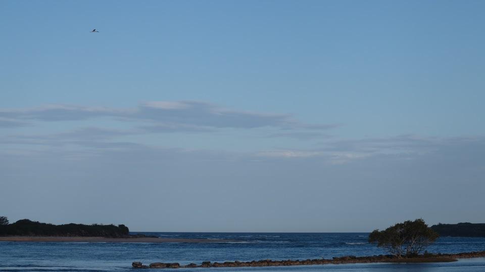 Jabiru flying, I missed the Ospreys and a Sea Eagle