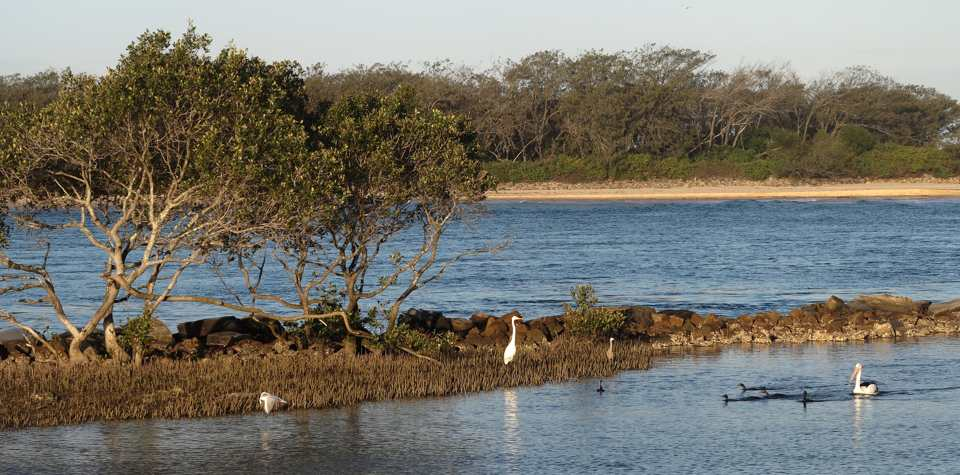 Night & White-faced Heron, pied and black cormorants, pelican, silver gull