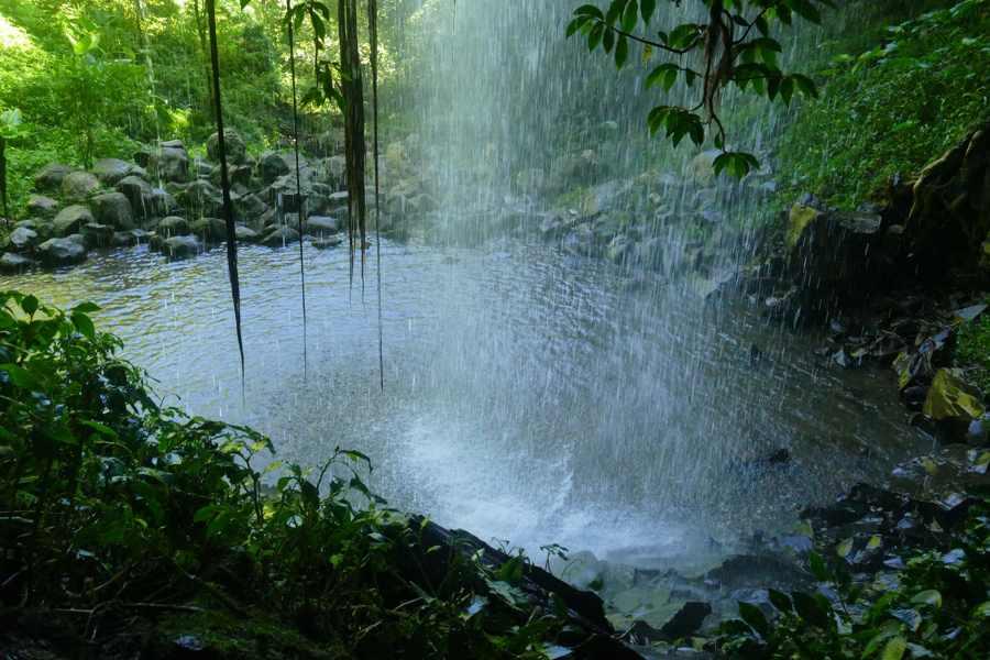 Lyrebird display dorrigo for Chrystal falls