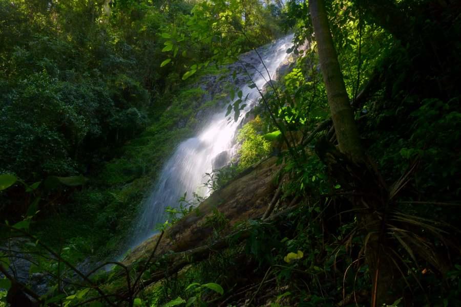 Tristania Falls, Dorrigo