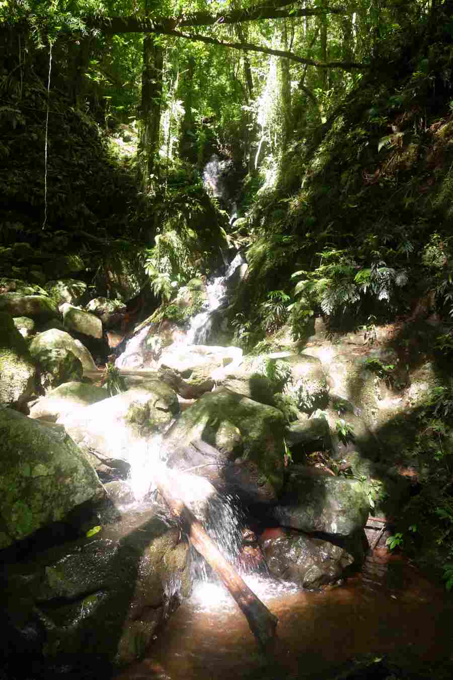 waterfall, unnamed, Dorrigo