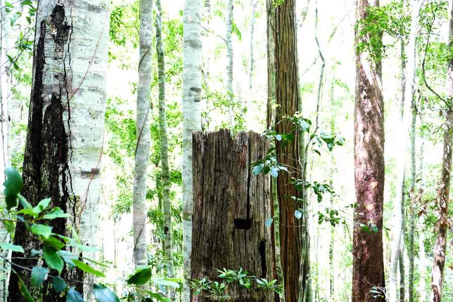 Rainforest_w