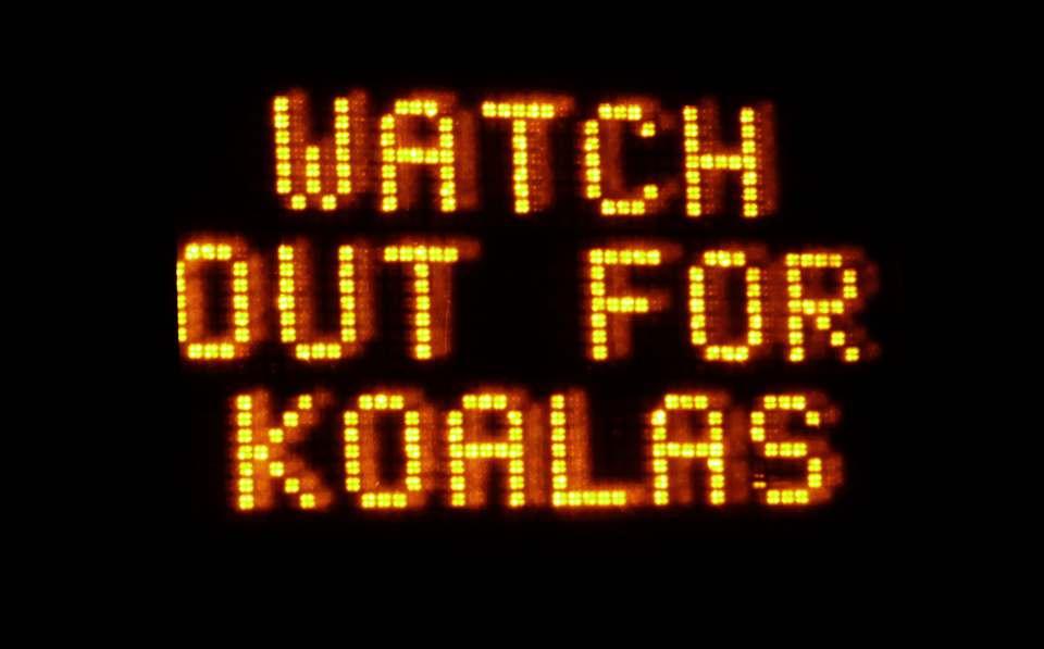 Koalas, watch out