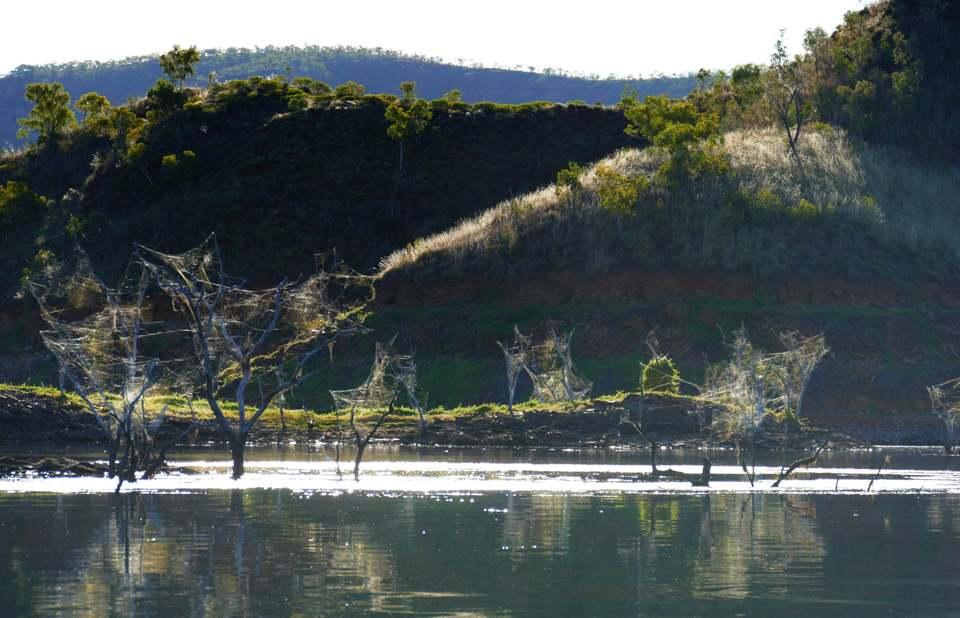 Lake Argyll webs