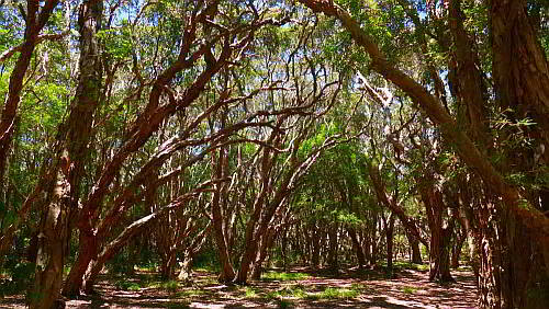 Paperbark swamp_VallaBeach