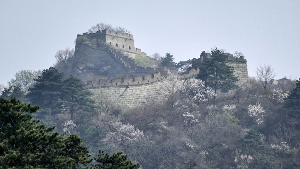 Cherry Blossom, Great Wall of China, Mutianyu