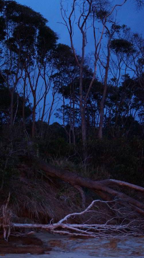 Fallen Tree, Eos