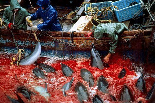 dolphin Taiji murder