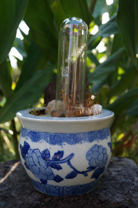 Asian Garden, bulb