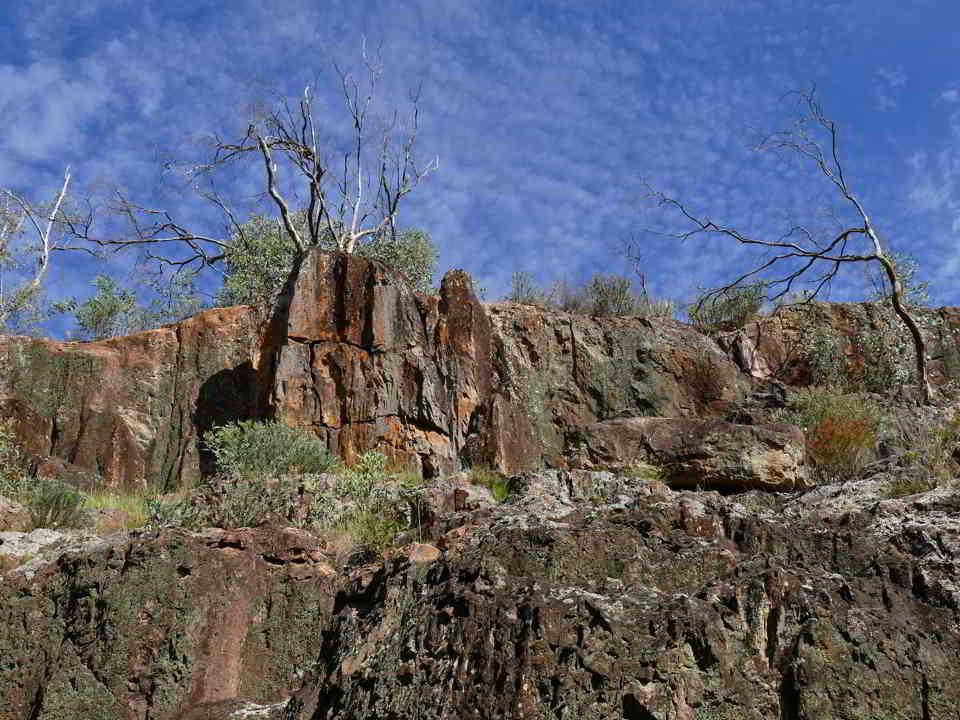 Mopra Creek walls full of Caper butterflies (hard to see in photo)