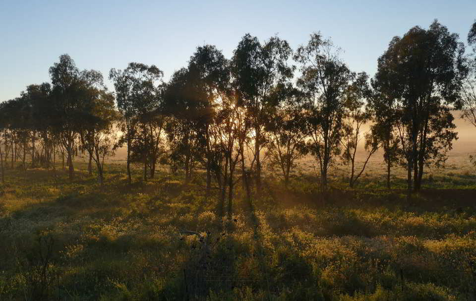 Leaving Oakhampton Helios through trees