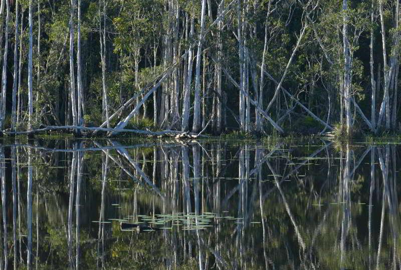 Paperbarks, wetlands Urunga