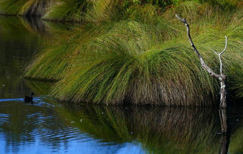 Wetlands Urunga