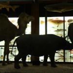 Tring rhino