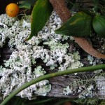 Bundanon, farming lichen