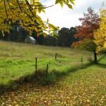Bundanon, Singleman's Hut, autumn leaves