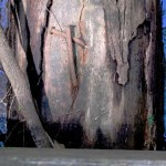 Jagun, Oyster Creek nailed