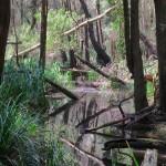 Jagun Oyster creek start's
