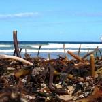 Kelp Mountain Valla panorama