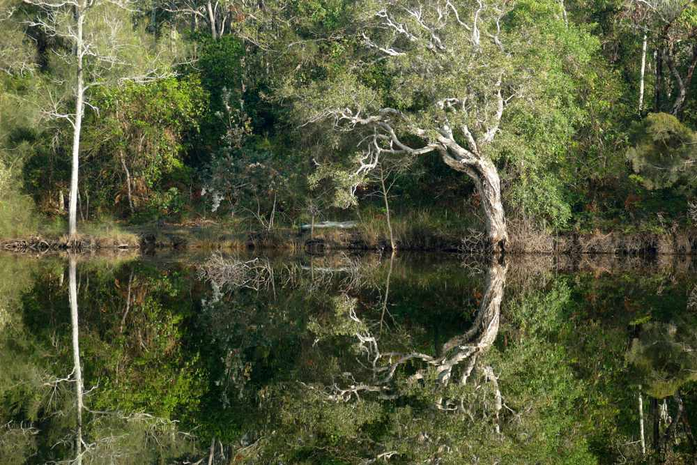 Photo of This is Where ~ Three Days in October (three bushwalks)