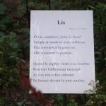 Poem, Florian, Hyatt gardens