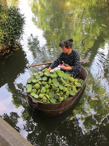 Selling Lotus seeds
