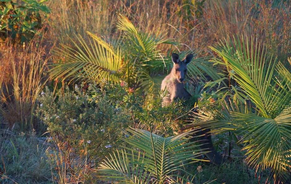 Roo in garden 21 oct
