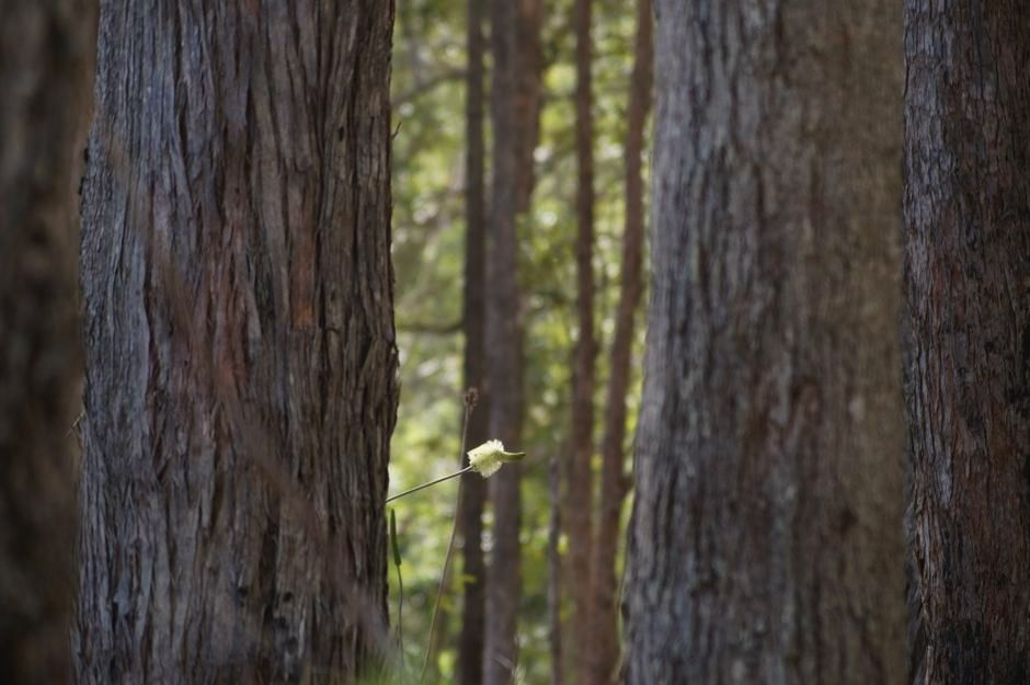 Photo of Grass trees flowering