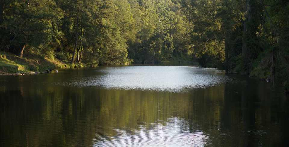Bellinger River, Thora3