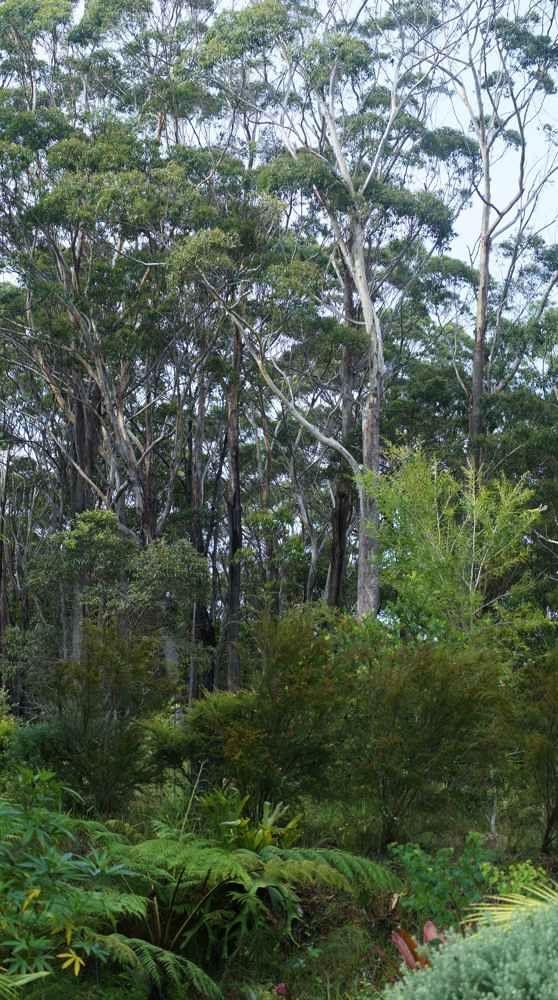 Blue Poles, with Jagun NR, borrowed garden