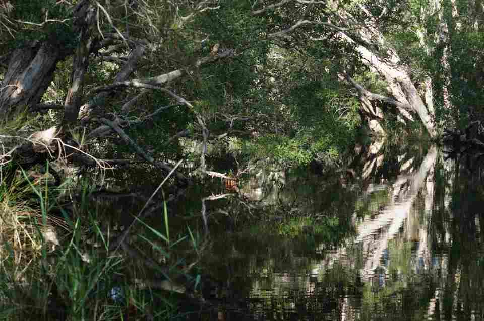 Oyster Creek 11 April2