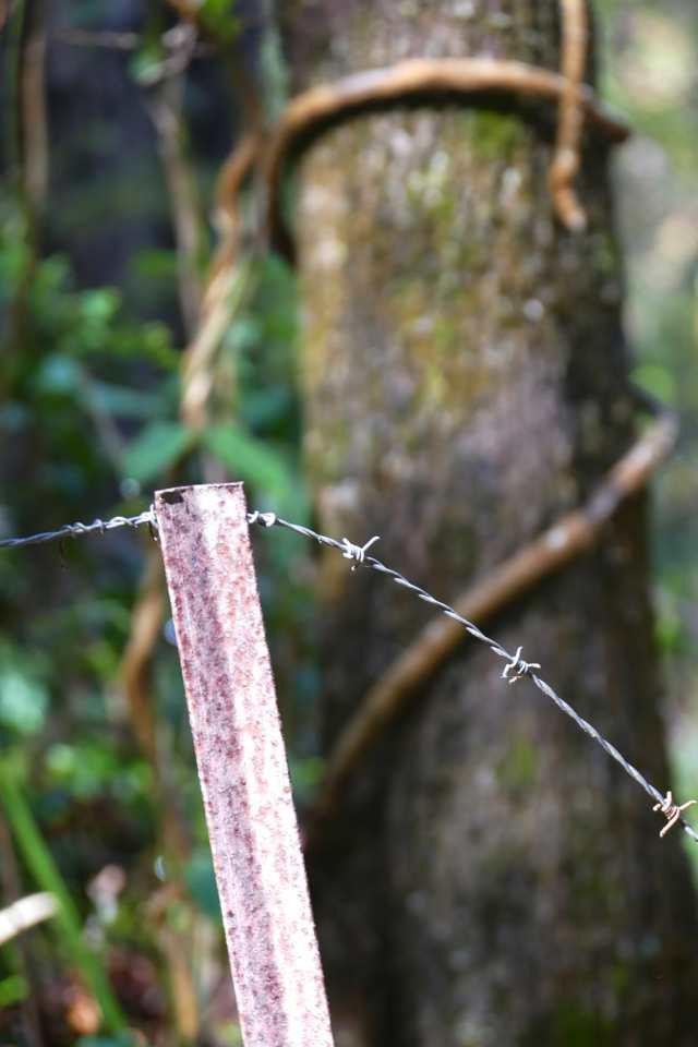 Barbed wire, Jagun_1