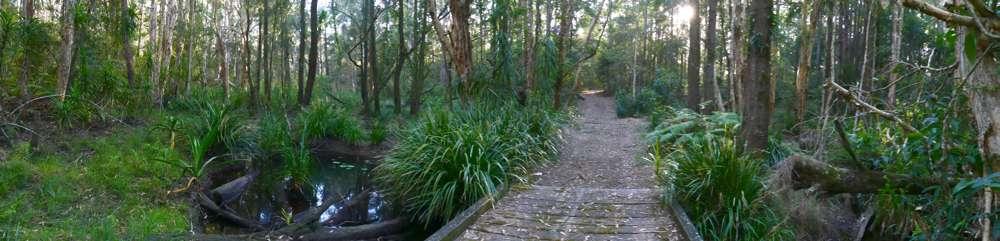 Oyster Creek, Jagun, just after sunrise