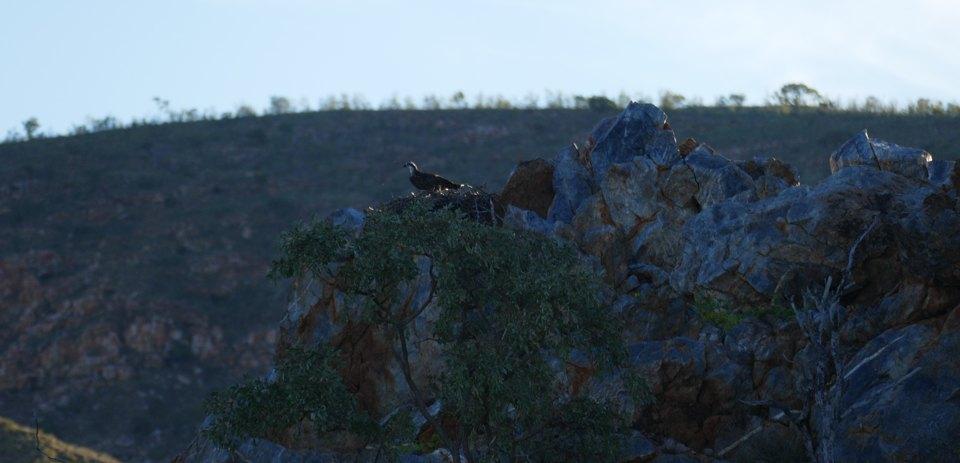 Lake Argyll Osprey