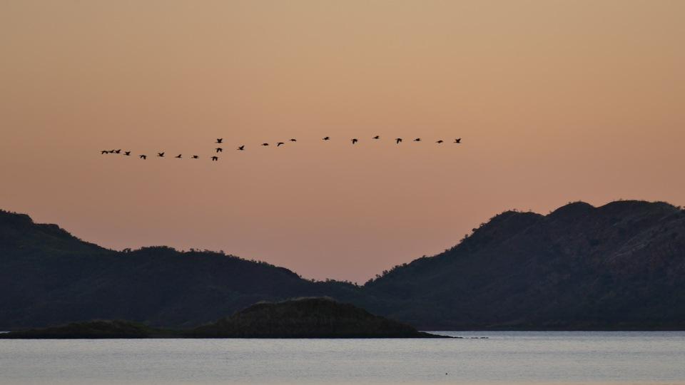 Lake Argyll dusk birds