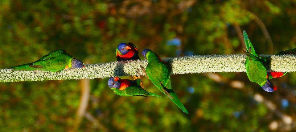 Rainbow colours3